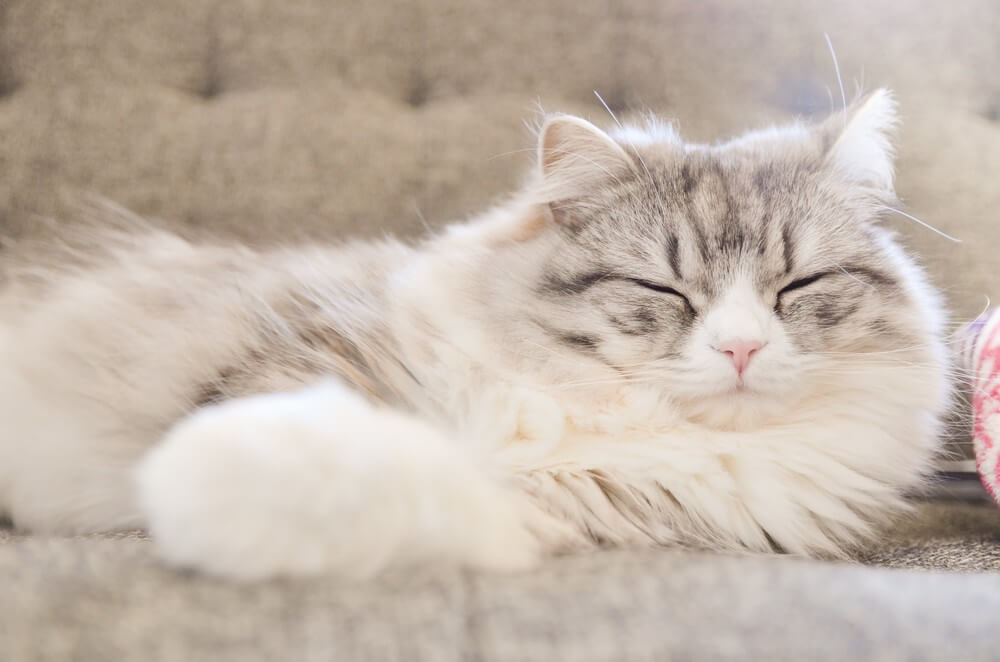 bsHIR93_sofa-deneteiruneko