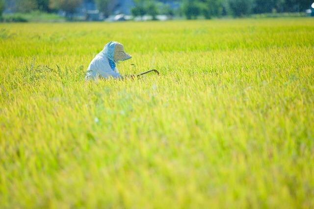 農地転用とは:地目変更、第5条、費用、手続き、期間、必要書類
