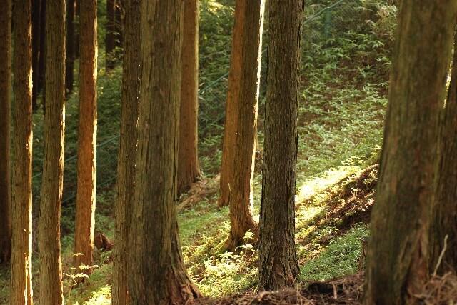 【土地活用】市街化調整区域の山林の活用方法